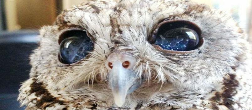 meet zeus the blind owl wings