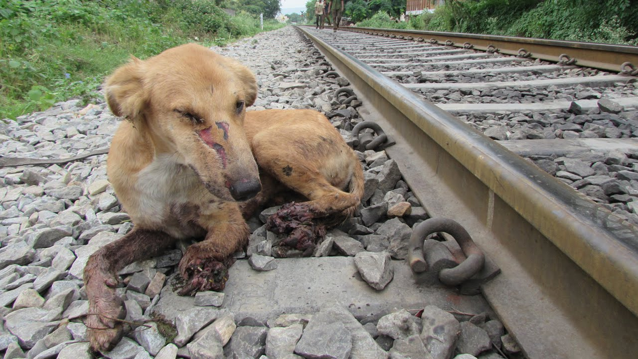 Watch Dogs  Dog Dead Lying Down