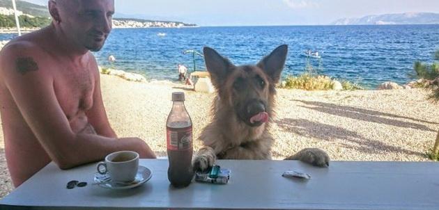 first-beach-bar-for-dogs-croatia-better-serve-dogs-3