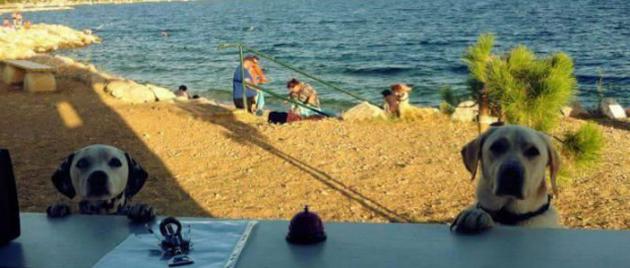 first-beach-bar-for-dogs-croatia-better-serve-dogs-5