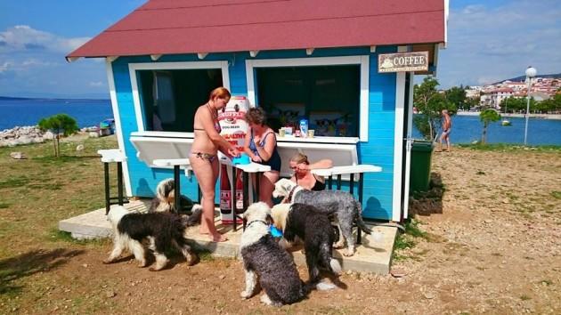 first-beach-bar-for-dogs-croatia-better-serve-dogs-6