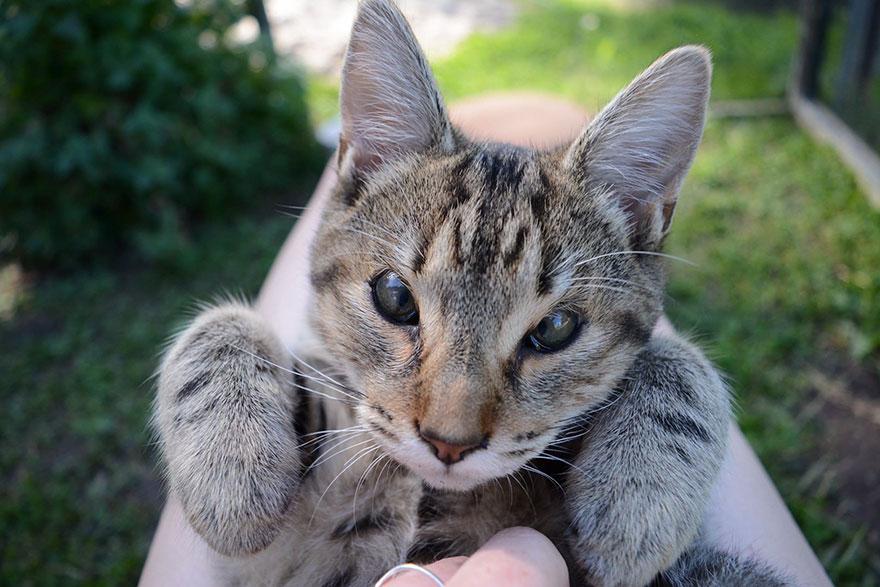 dora-felix-kittens-born-without-eyelids-get-new-chance-life-2