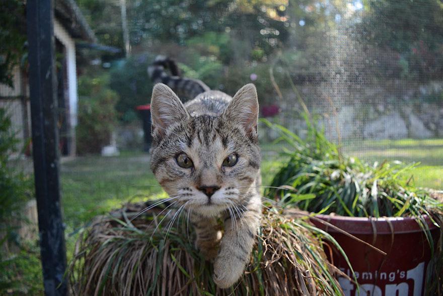 dora-felix-kittens-born-without-eyelids-get-new-chance-life-3