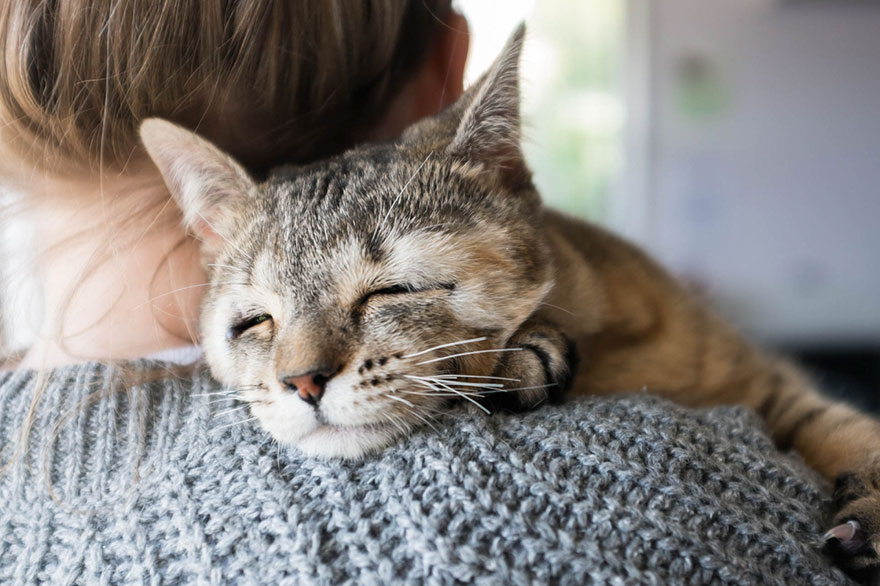 dora-felix-kittens-born-without-eyelids-get-new-chance-life-4