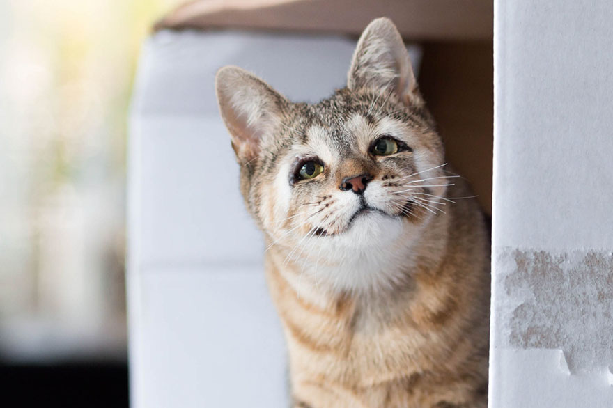 dora-felix-kittens-born-without-eyelids-get-new-chance-life-5
