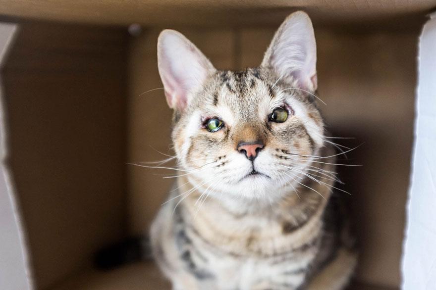 dora-felix-kittens-born-without-eyelids-get-new-chance-life-7