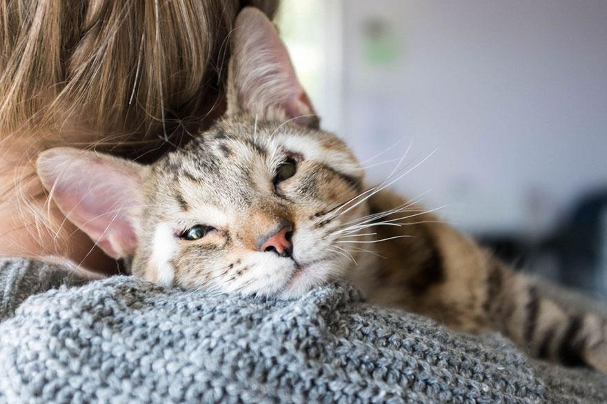 dora-felix-kittens-born-without-eyelids-get-new-chance-life-8