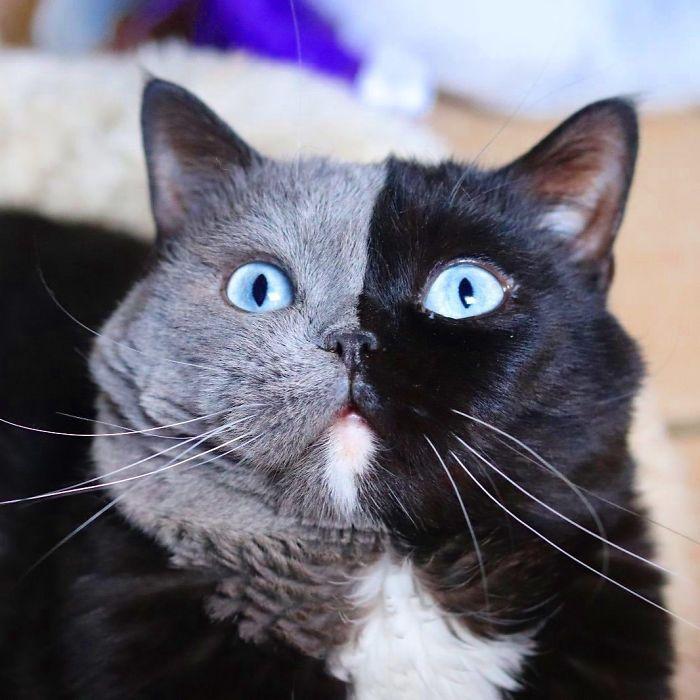 chats sexo na latada em coimbra